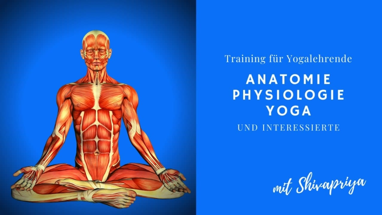 Anatomie-Training